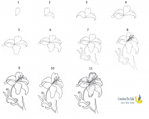 how to draw a lily lily step by step drawing at getdrawings free download draw how lily to a