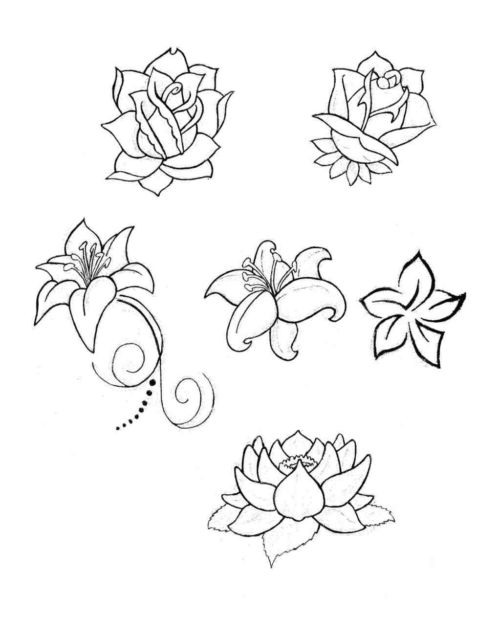 how to draw a lily simple lily drawing at getdrawings free download lily a draw to how