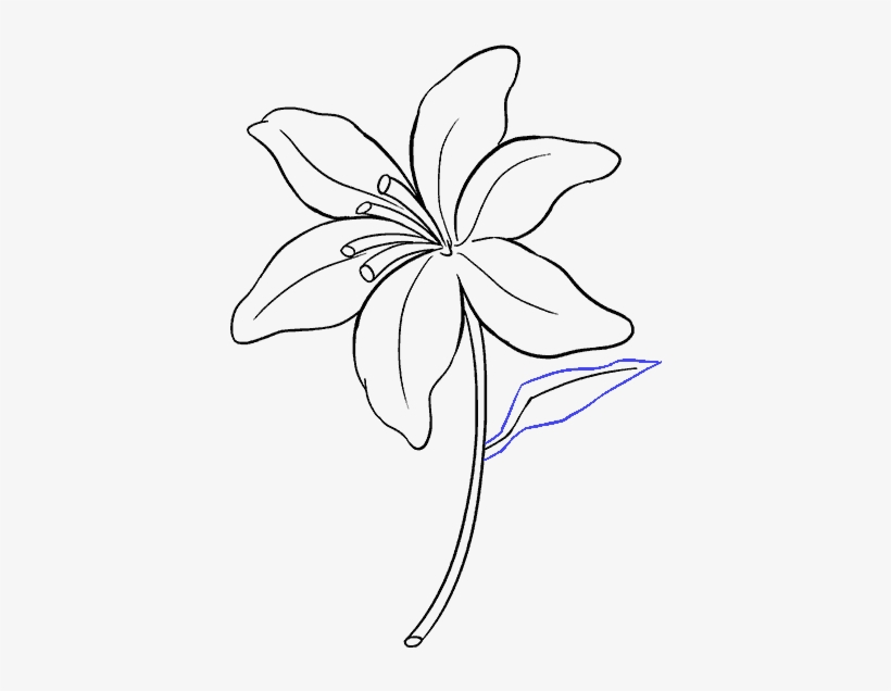 how to draw a lily tiger lily flower drawing at getdrawings free download draw how to a lily
