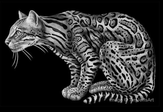 how to draw a ocelot billy the ocelot by sheryl unwin ocelot cat painting how ocelot to draw a