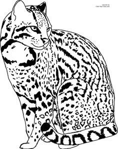 how to draw a ocelot download ocelot coloring for free designlooter 2020 draw to ocelot how a