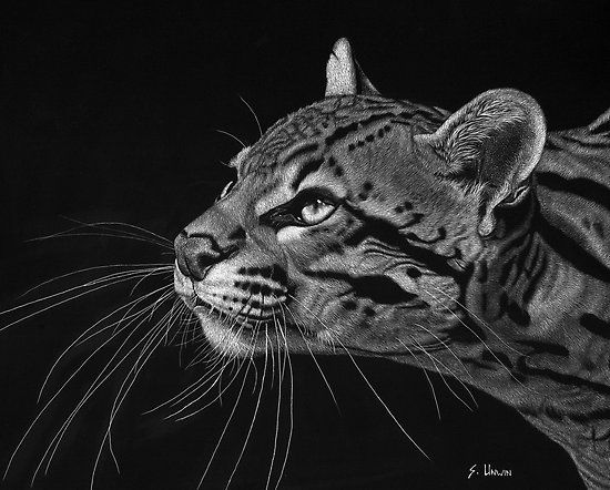 how to draw a ocelot gorgeous ocelot drawing that would make an insane tattoo ocelot a how draw to