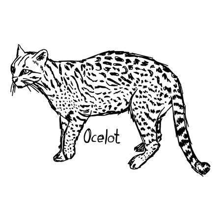 how to draw a ocelot library of ocelot vector black and white download png how draw to ocelot a