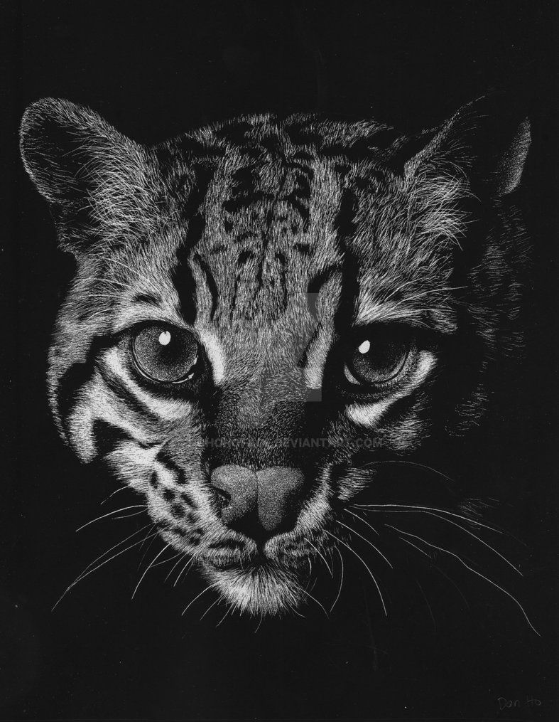 how to draw a ocelot ocelot by hohohoface pencil drawings pencil drawings of draw how to a ocelot