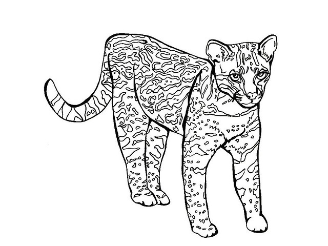 how to draw a ocelot ocelot drawing at getdrawings free download draw how ocelot a to