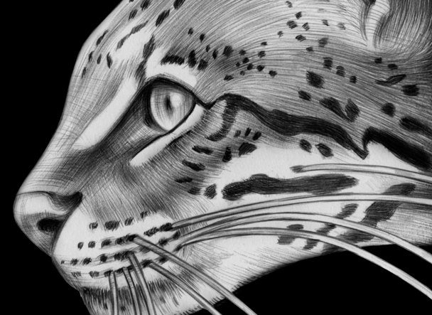 how to draw a ocelot ocelot ink drawing by timjeffsart on etsy a ocelot to draw how