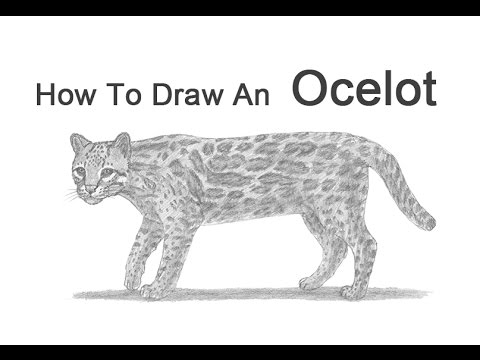 how to draw a ocelot ocelot sketch by dragonsdust on deviantart a draw to ocelot how