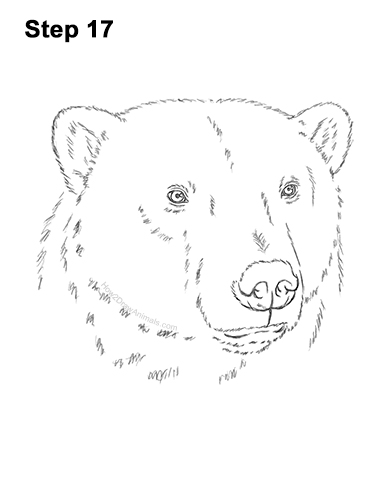 how to draw a polar bear head bear outline drawing free download on clipartmag to bear polar head how a draw