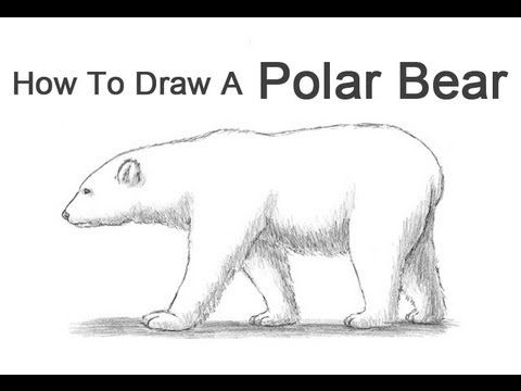 how to draw a polar bear head how to draw a bear paper drawing pencil eraser and bears head polar bear to how draw a
