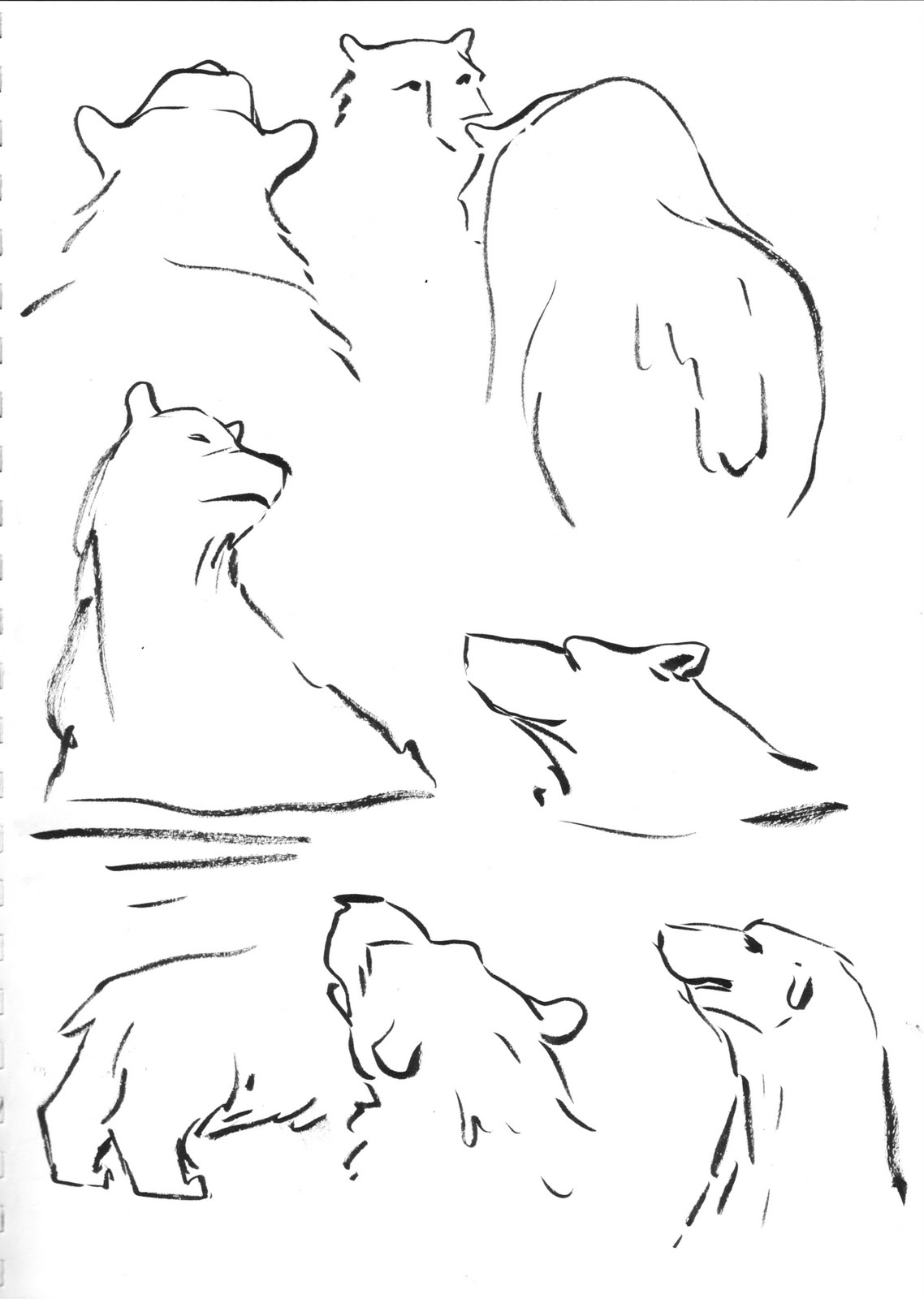 how to draw a polar bear head polar bear drawing step by step at getdrawings free download head how bear a polar draw to