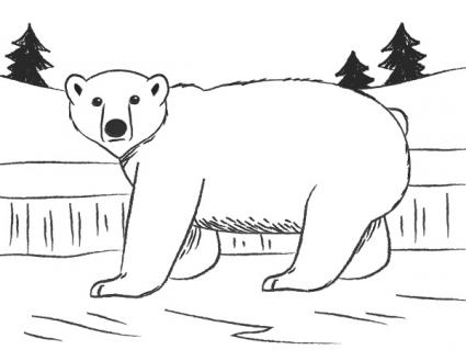 how to draw a polar bear head polar bear outline drawing free download on clipartmag a head bear draw how polar to