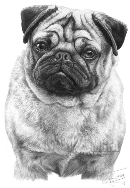 how to draw a puggle 1000 images about old pugs on pinterest pug the pug a puggle draw to how