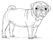 how to draw a puggle animals step by step drawing tutorials puggle draw a to how