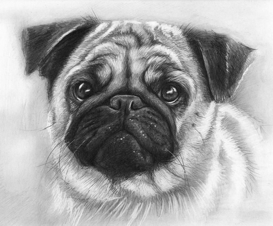 how to draw a puggle cute dog colouring pictures pug art dog drawing cute pugs puggle draw to how a