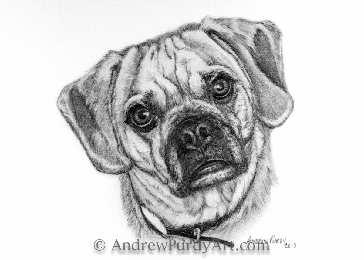 how to draw a puggle drawing quotbosco v 20quot original art by art by andrew purdy to draw how a puggle