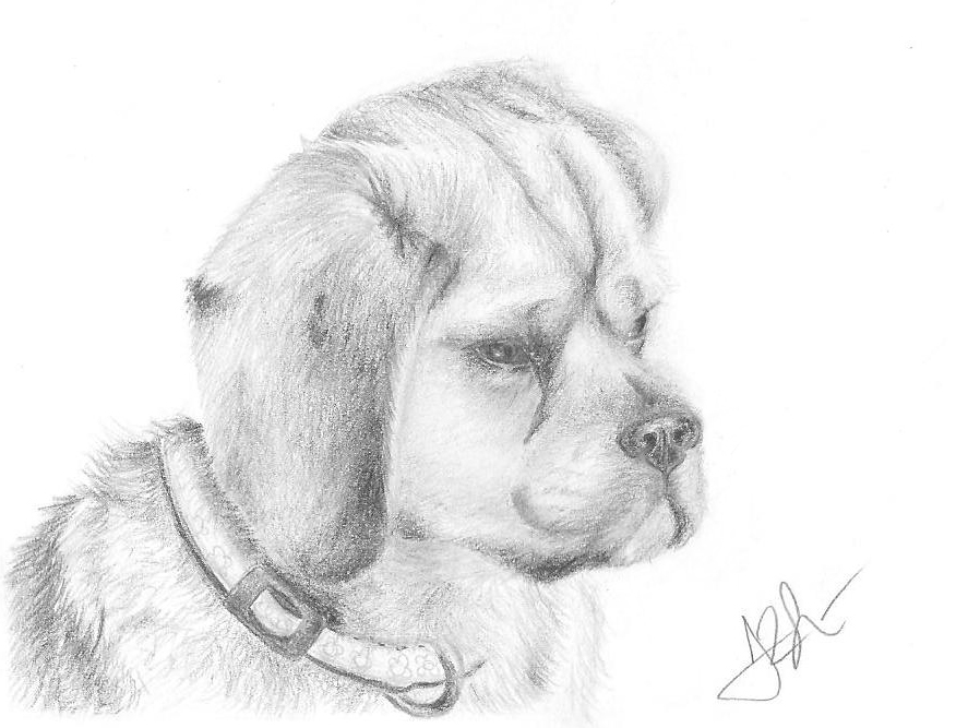 how to draw a puggle how to draw a puggle step by step pets animals free how to puggle draw a