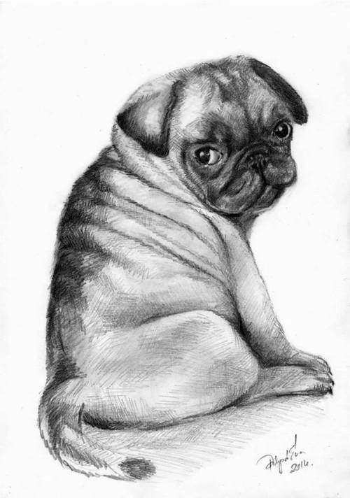 how to draw a puggle les 1454 meilleures images du tableau carlins sur to a puggle draw how