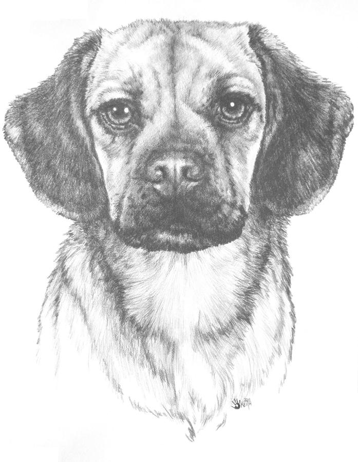 how to draw a puggle mr puggle by barbara keith how to a draw puggle