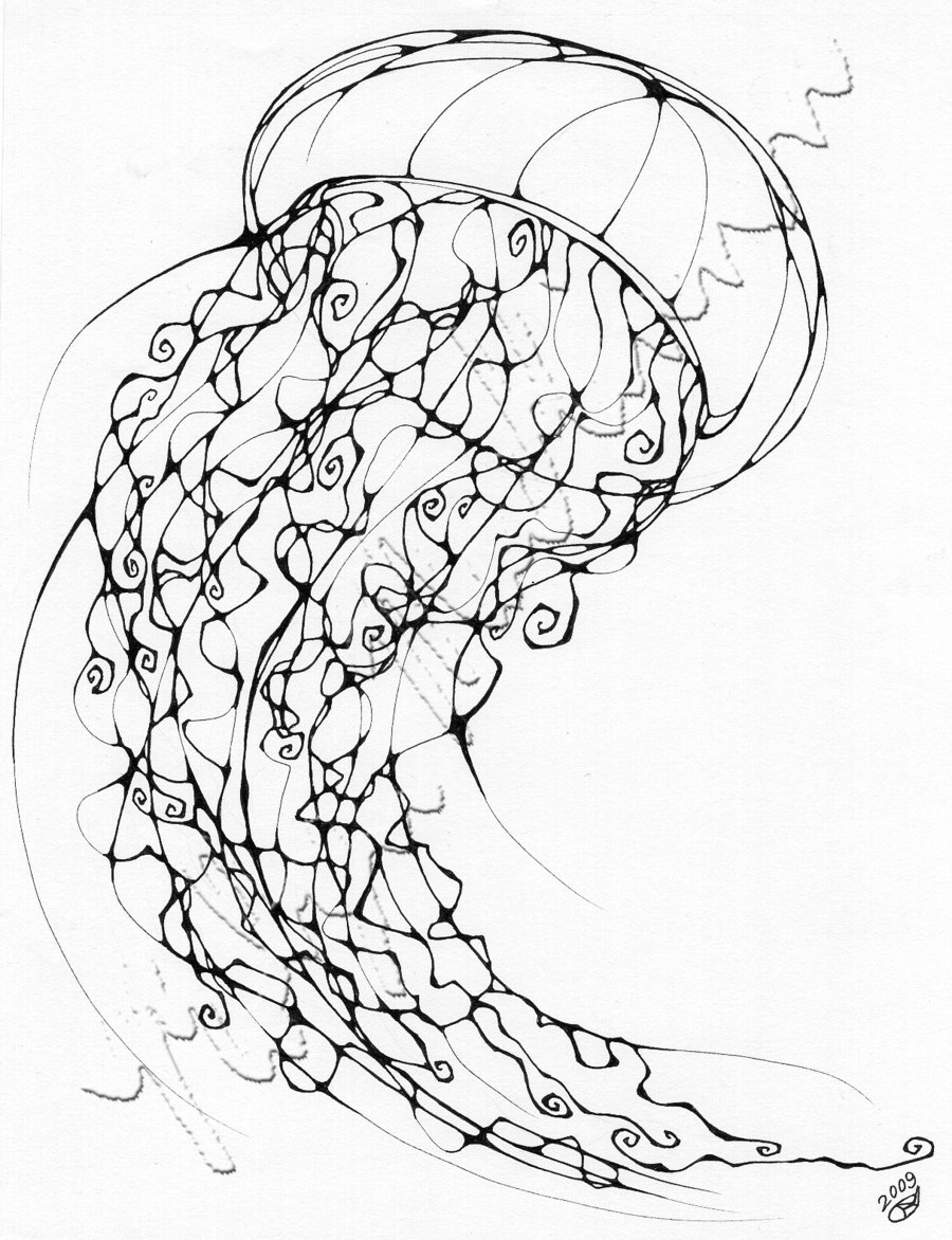 how to draw a realistic jellyfish chrysaora quinquecirrha sea nettle sketch by ianumeric to jellyfish realistic draw a how