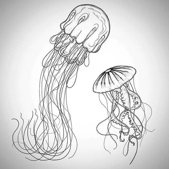 how to draw a realistic jellyfish how to draw a jellyfish drawingforallnet how to draw a jellyfish realistic