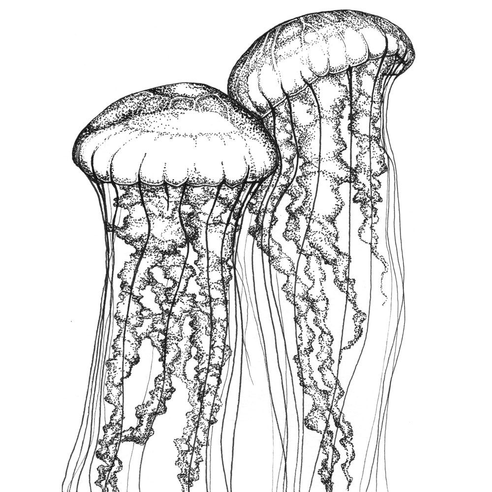 how to draw a realistic jellyfish how to draw a jellyfish step by step drawing tutorials a jellyfish draw realistic how to