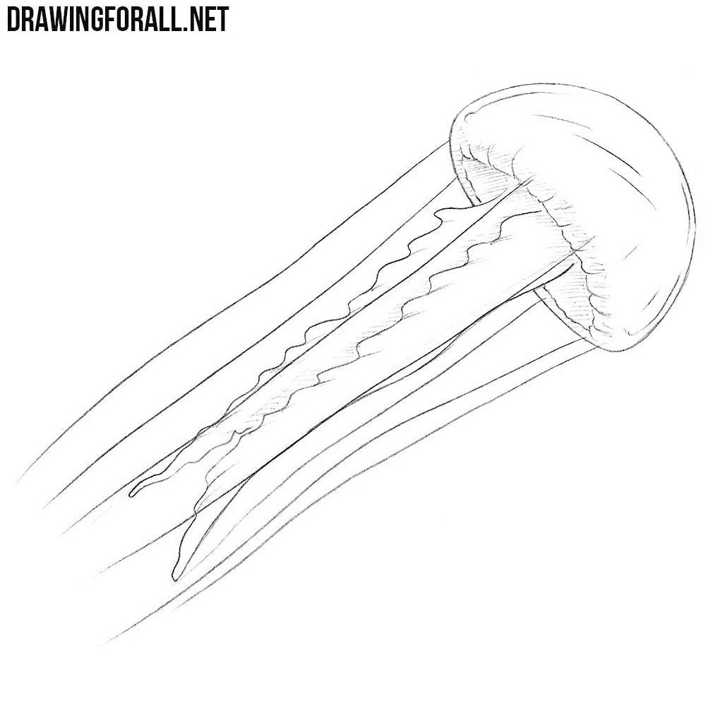 how to draw a realistic jellyfish how to draw simple learn how to draw a jellyfish with realistic how to jellyfish a draw