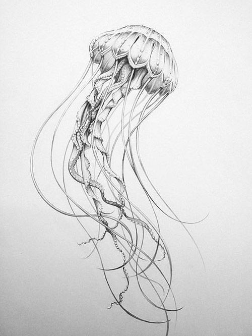 how to draw a realistic jellyfish jellyfish drawing images jellyfish art jellyfish jellyfish to draw realistic a how