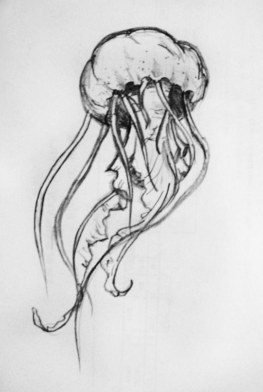 how to draw a realistic jellyfish realistic jellyfish drawing at getdrawings free download draw realistic jellyfish how to a