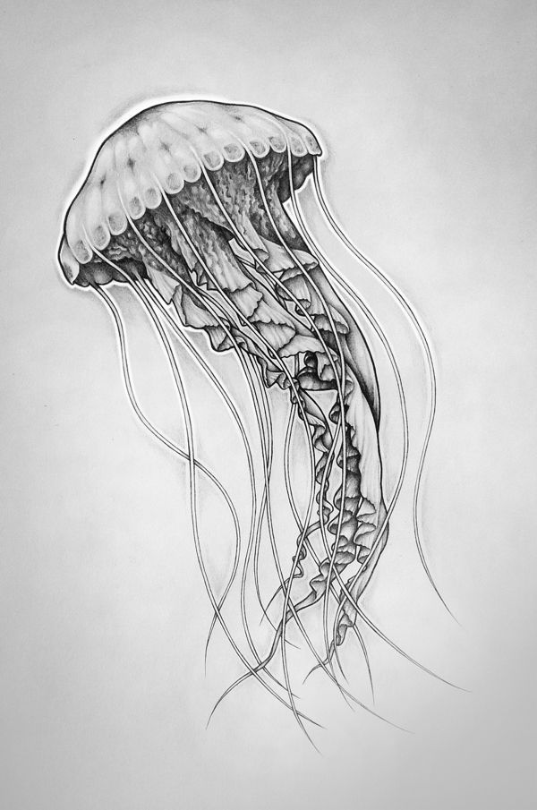 how to draw a realistic jellyfish realistic jellyfish drawing at getdrawings free download draw to a how realistic jellyfish