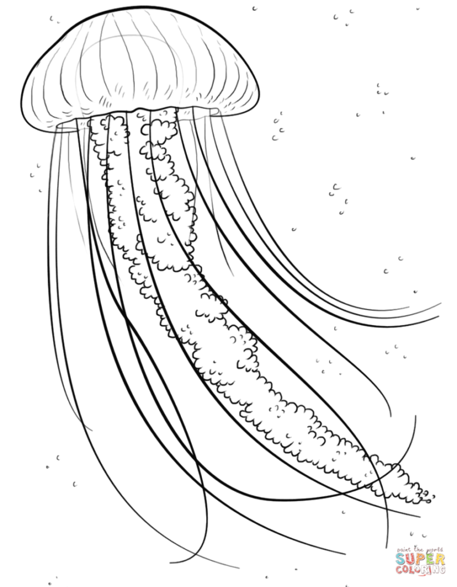 how to draw a realistic jellyfish realistic jellyfish drawing at paintingvalleycom to jellyfish realistic a how draw