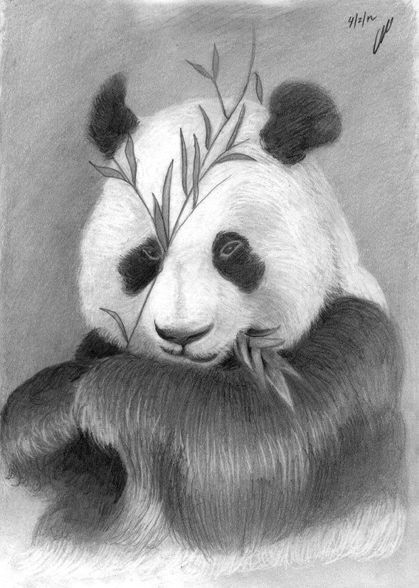 how to draw a realistic panda artist makes hyper realistic drawings to the point where a to draw panda how realistic