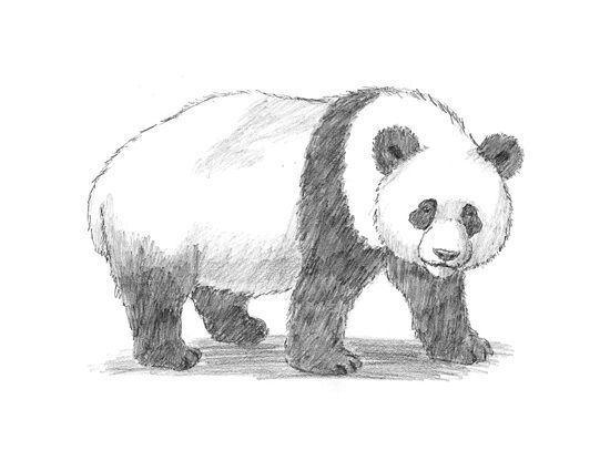 how to draw a realistic panda artist makes hyper realistic drawings to the point where draw how a panda realistic to