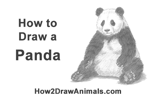 how to draw a realistic panda baby panda by bannanapower on deviantart how panda draw realistic to a