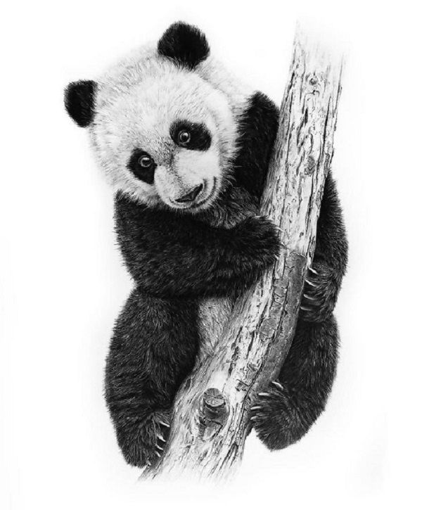 how to draw a realistic panda drawings of cute baby pandas picture baby panda drawing how realistic draw a to panda