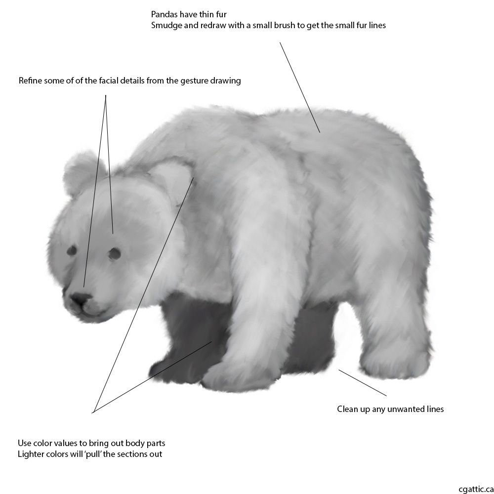 how to draw a realistic panda giantpandalargegif 526600 panda artwork panda art panda realistic to a draw how
