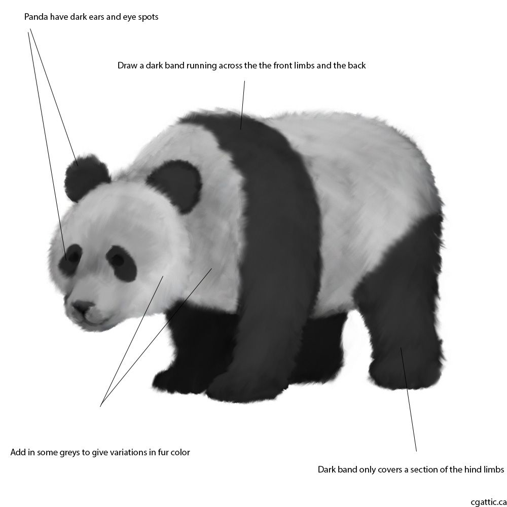 how to draw a realistic panda how to draw a panda a panda draw to realistic how