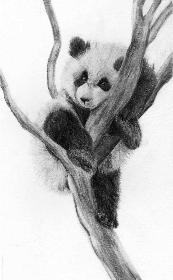 how to draw a realistic panda panda drawing Рисунки Раскраски a draw to realistic panda how