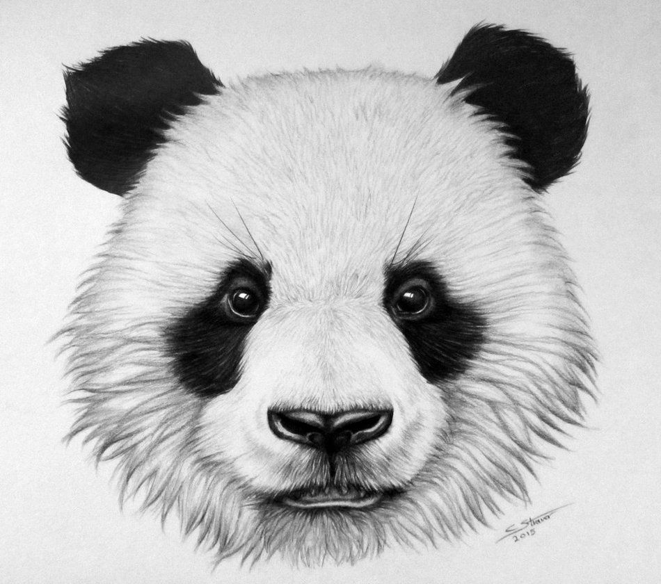 how to draw a realistic panda panda drawing realistic google search panda drawing a realistic how panda draw to