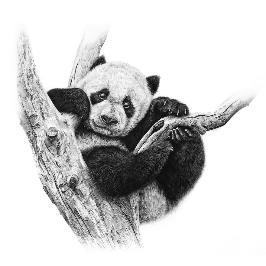 how to draw a realistic panda pin by sandy tucker on cabin panda art animal drawings how realistic a draw panda to