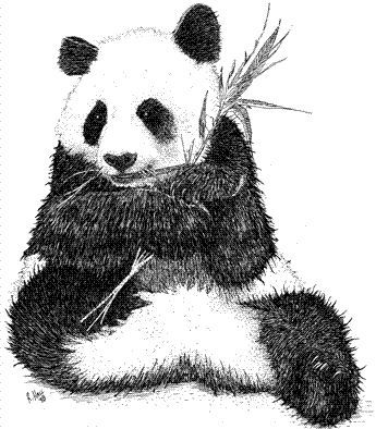 how to draw a realistic panda pin by sherry fredriksen snider on jehovah39s cutesiest to how panda realistic a draw