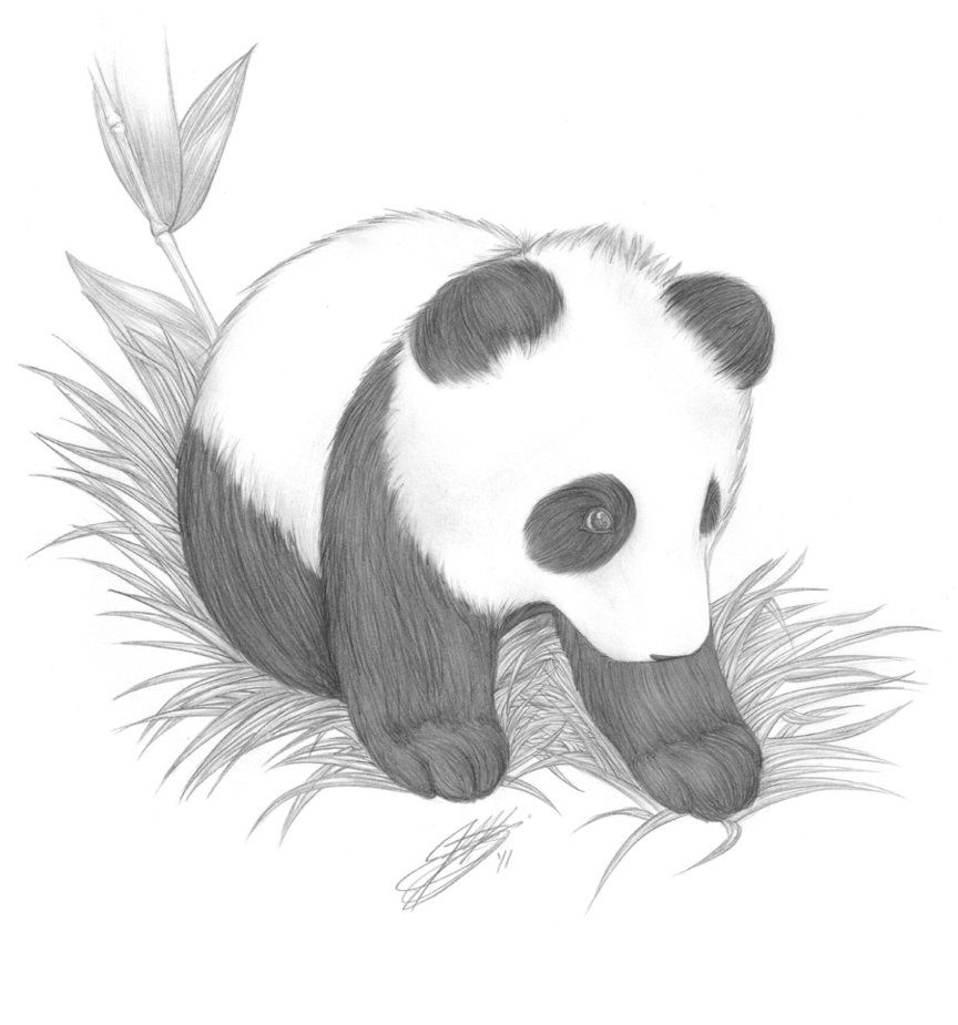 how to draw a realistic panda pin on pandamonium draw how a panda realistic to