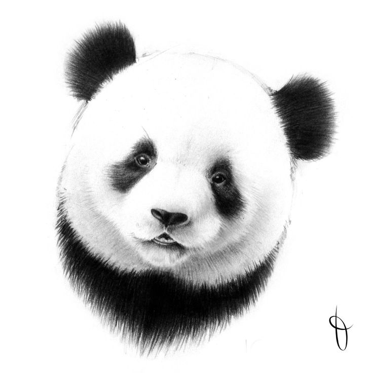 how to draw a realistic panda pin on pen and ink realistic how panda a draw to