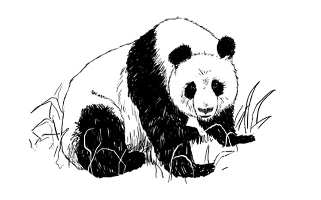 how to draw a realistic panda realistic panda drawing in 4 steps with photoshop panda a realistic draw to how panda