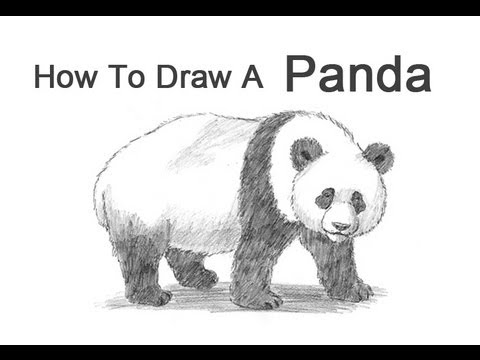 how to draw a realistic panda realistic panda drawing sketch hanging on the tree try it how a to realistic panda draw