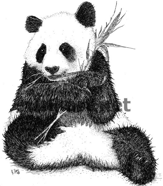 how to draw a realistic panda realistic panda drawing to a how realistic draw panda