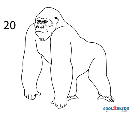 how to draw a silverback gorilla how to draw a gorilla agressive stance to how draw a silverback gorilla