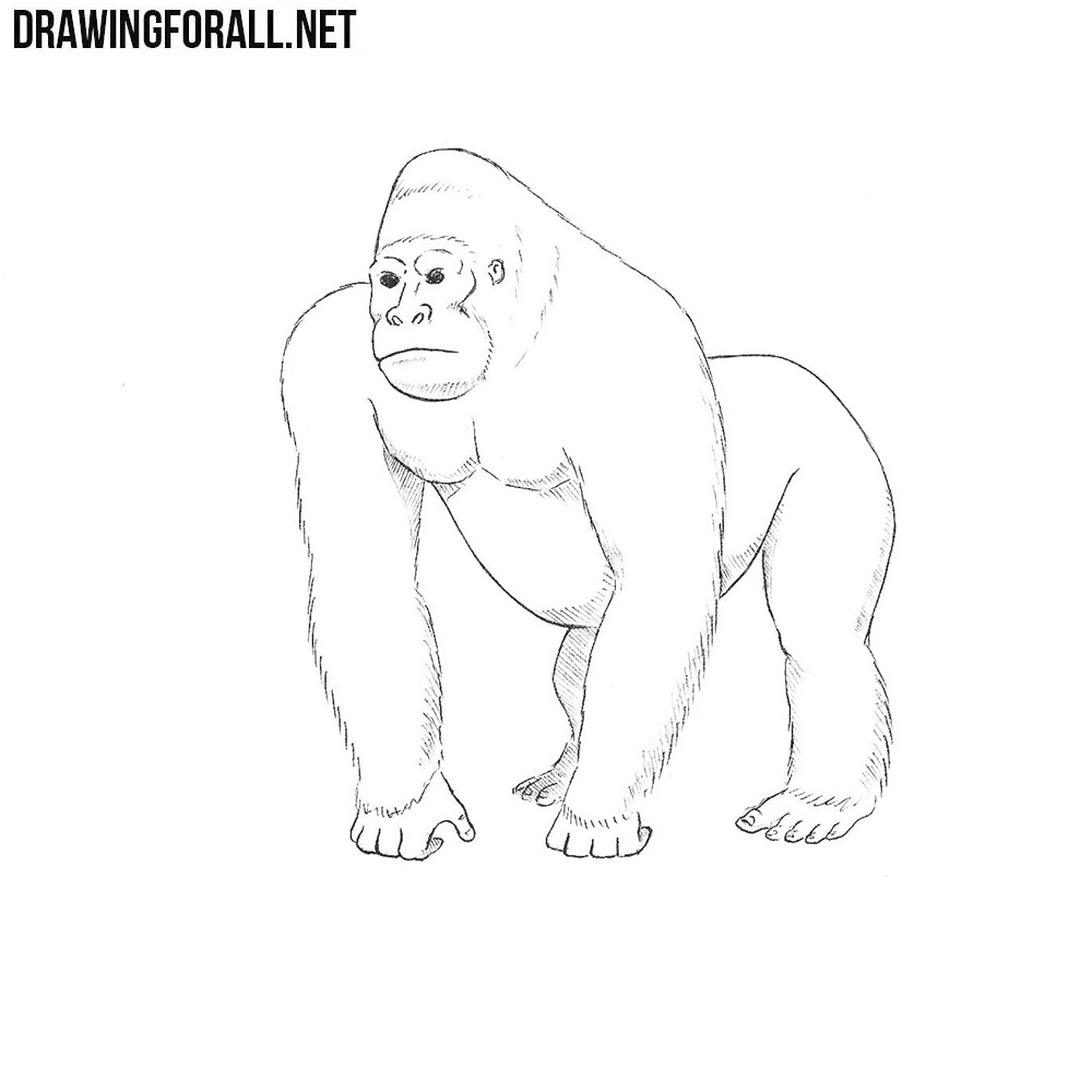 how to draw a silverback gorilla how to draw a gorilla draw central drawings animal how silverback draw to a gorilla