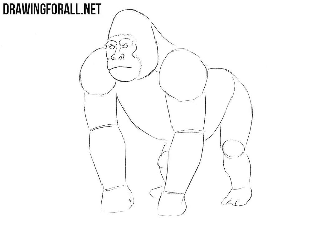 how to draw a silverback gorilla how to draw a gorilla drawingforallnet gorilla silverback draw a to how