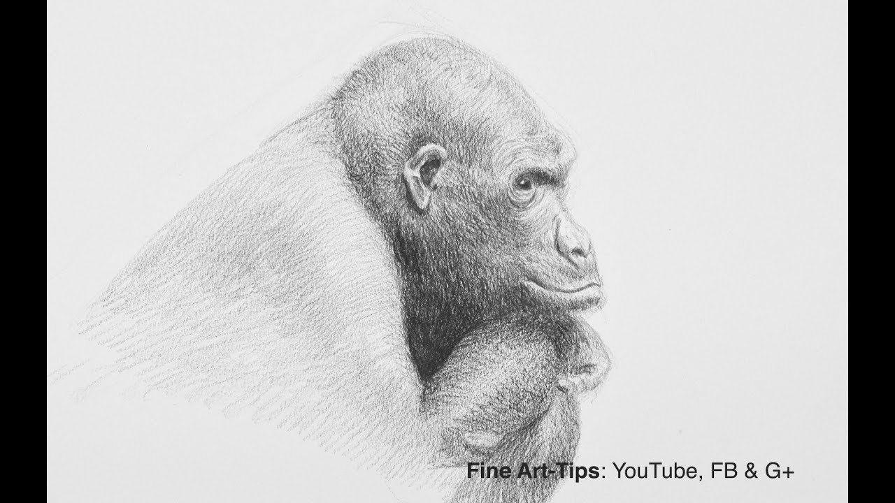 how to draw a silverback gorilla how to draw a gorilla narrated testing staedtler gorilla draw silverback a how to