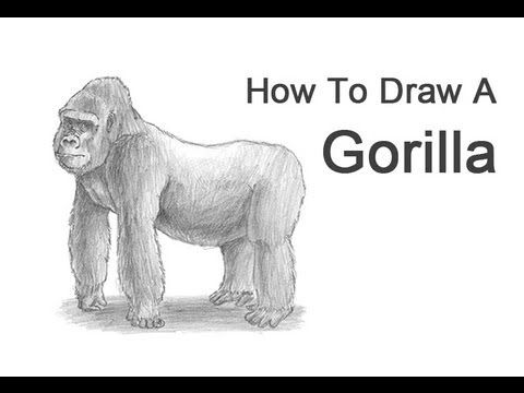 how to draw a silverback gorilla how to draw a gorilla sketchbook challenge 36 silverback a draw how to gorilla